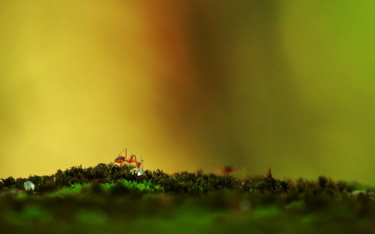 The Ant Prays ForRain